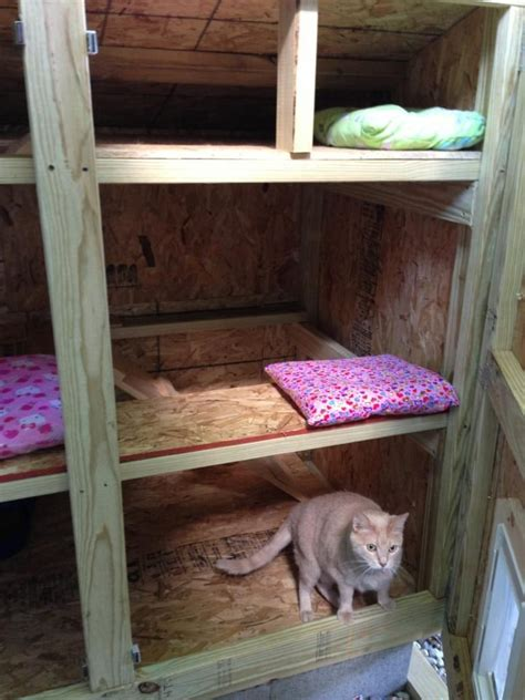 cat and dog houses 169 best cat and dog houses shelters images on pinterest craft cat wall shelves and