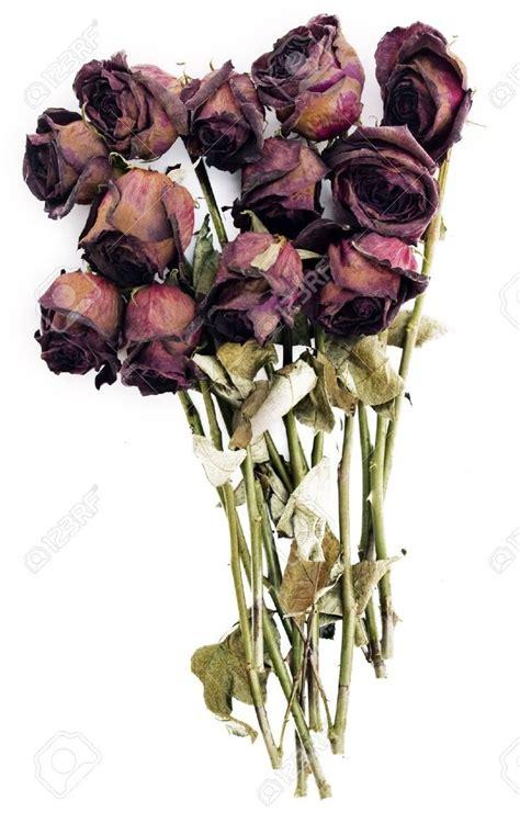imagenes de flores marchitas 285 mejores im 225 genes de todo rojo en pinterest rojo