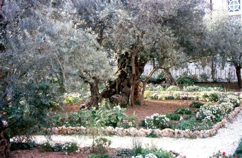 der garten gethsemane land der bibel