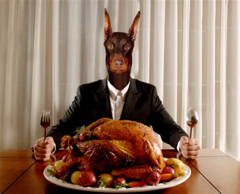 can a eat turkey e sim thanksgiving misgivings
