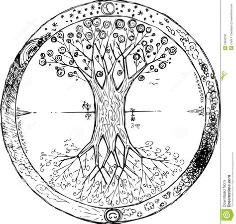 coloring yggdrasil the celtic tree of life vector stock
