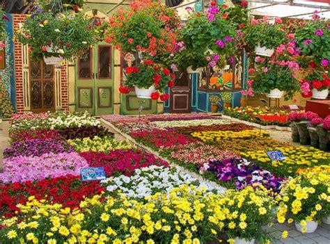 Pupuk Tanaman Bunga Yang Bagus e petani cara budidaya tanaman hias mawar