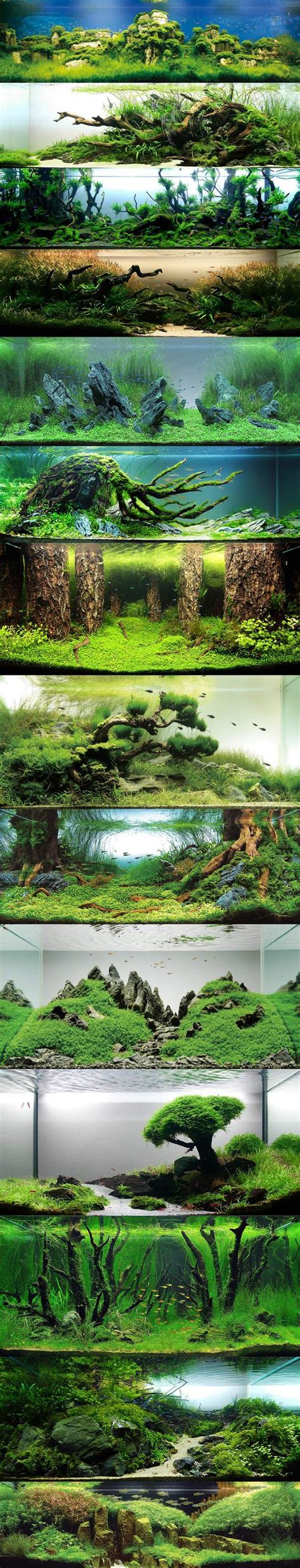Fan Diy Aquascape Tank 30 70 Aquascape Build Your Own Micro Ecosystem Cool Steemit