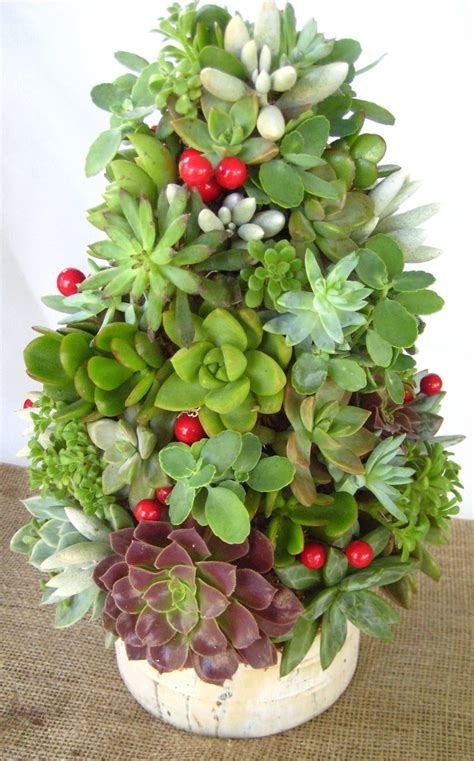 succulent christmas tree succulents by jmo