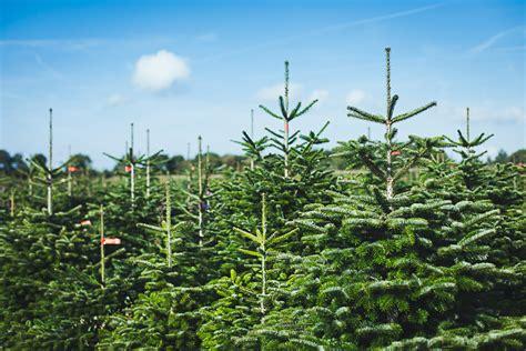 weihnachtsbaum bestellen markt 252 bersicht test preise