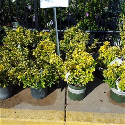 johnson s garden centers nurseries gardening wichita