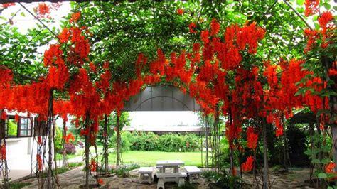 bunga tropis  mudah dirawat wwwpicswenet