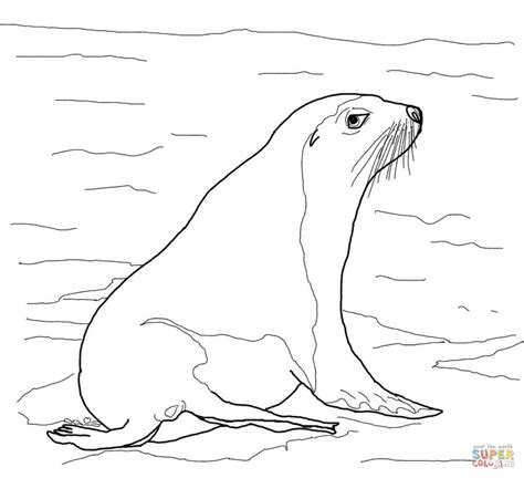 sea lion coloring pages printable australian sea lion coloring page free printable