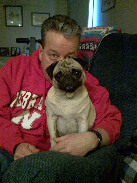 midwest pug rescue midwest pug rescue mn division success stories
