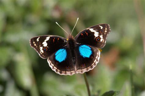 imagenes de animales endemicos definici 243 n de especie end 233 mica 187 concepto en definici 243 n abc