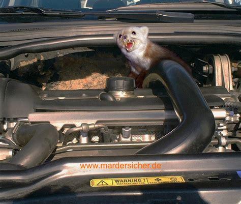 Marder Im Auto by Marder Im Auto Das Hilft Wirklich Gegen Bei 223 Attacken N