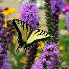 Attracting Butterflies And Hummingbirds To Your Backyard Garden Other Critters On Pinterest Bees Ladybugs And