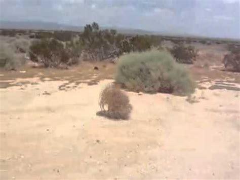 Tumbleweed by Strohballen Fliegt Rum Youtube