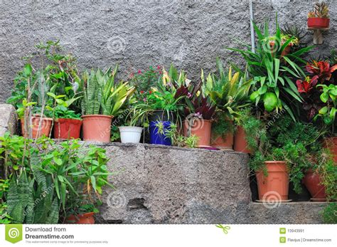 tiny potted plants small potted plants stock image image of plants fall