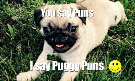 pug pun pug puns are pugworthy they will tickle your punny bone dogs all the time