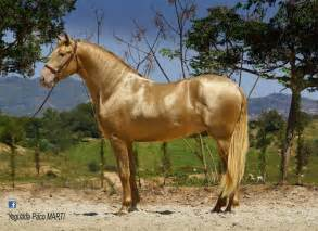 andalusian colors shades of pearl coat colours