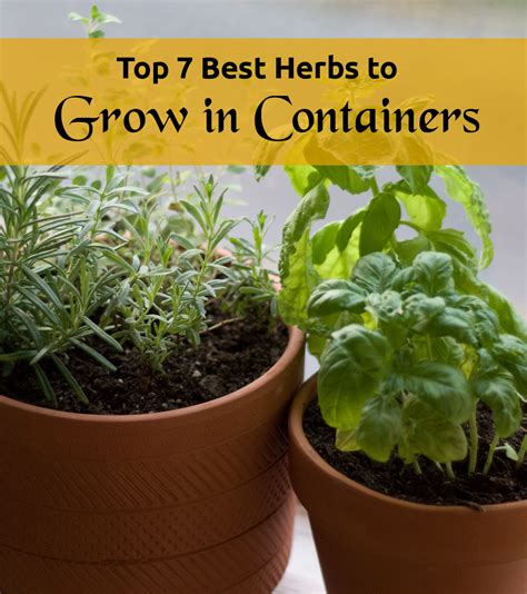 how to grow a herb garden in pots top 7 best herbs to grow in containers