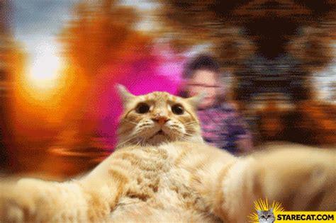 selfie cat gif animation starecatcom