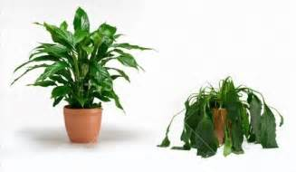 Houseplants That Don T Need Sunlight gold coast chiropractor healthy and unhealthy plants