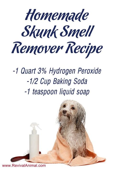 homemade dog shoo for good smell simple homemade skunk smell remover recipe for dogs cats