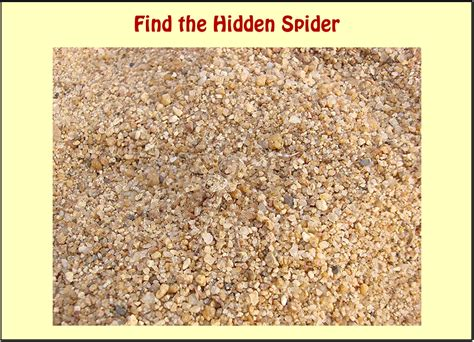 Find With A Picture Whatsapp Picture Riddle Find The Spider Bhavinionline