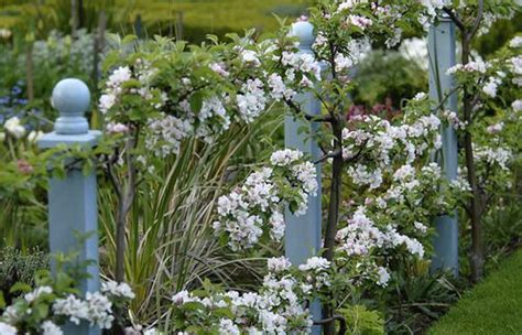 1000 images about garden on gardens trees