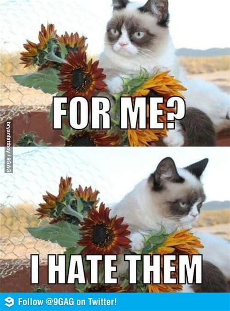 Grumpy Cat Meme Valentines Day - grumpy cat does valentines day hoyden about town