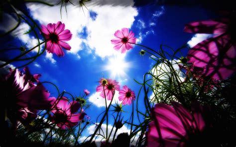 imagenes de flores para descargar excelentes fotos flores gratis para descargar imagenes