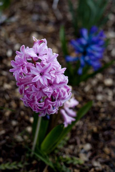 spring start loving the spring eating richly