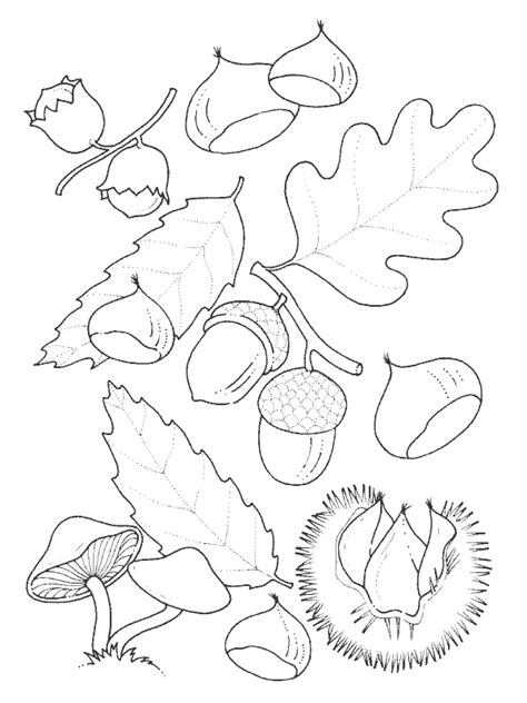leaf identification coloring pages coloring page leaf coloring me