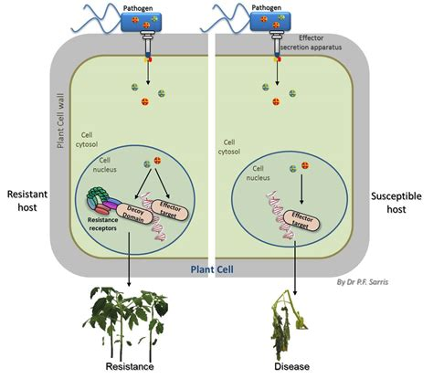 theory and pattern in plant defense allocation plant receptors with built in decoys make pathogens betray