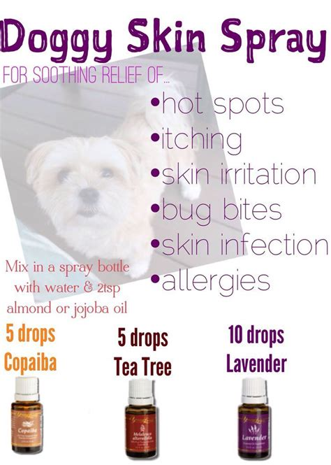 essential oils for skin allergies 29 best images about living oils on valor essential fall scents