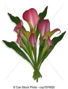 stock illustrations of calla lilies bouquet of flowers