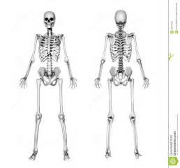 8 X 12 Rug De Voorzijde Amp De Rug Van Het Skelet De Tekening Van Het