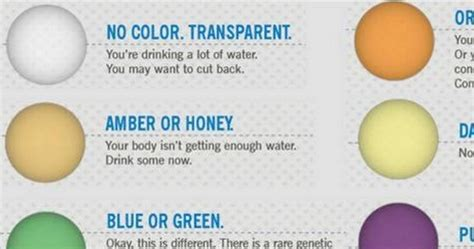 what color should your urine be what color is healthy urine paperwingrvice web fc2