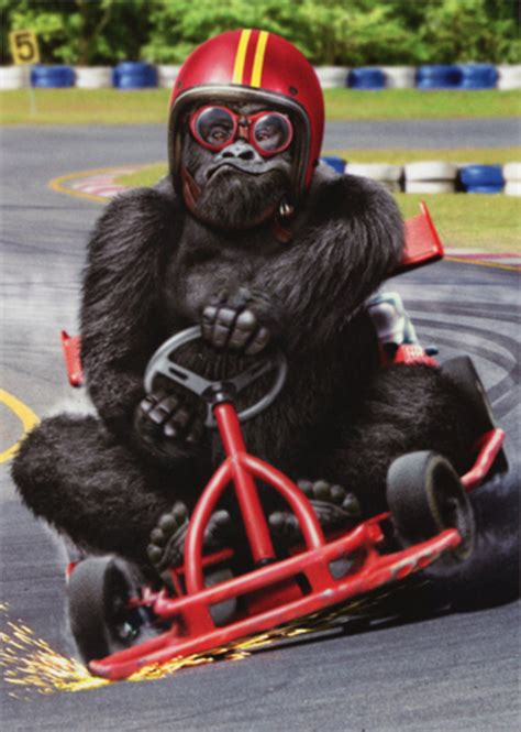 gorilla  kart funny birthday card  avanti press
