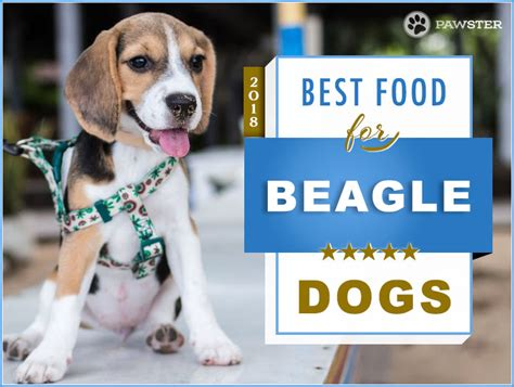 best puppy food for beagles top 6 recommended foods for a beagle