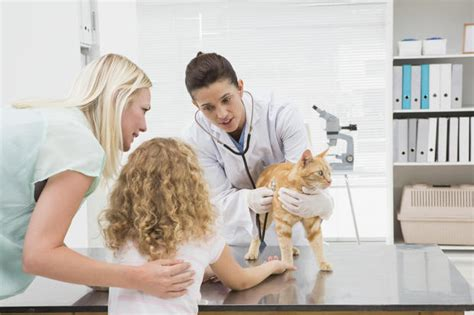 average cost of vet visit for 5 find a charity 9 ways to get cheap or free vet care for your pet cbs news
