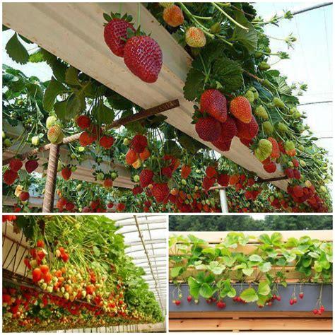 vibrant vertical garden pyramid planter guide