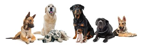 free puppies denver