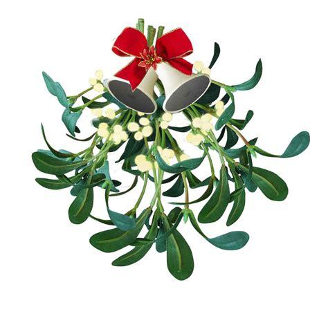 white mistletoe secretly healthy
