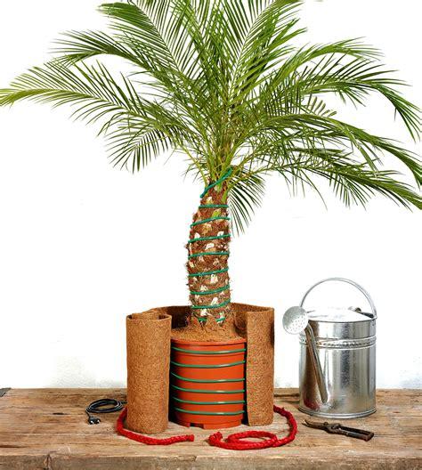 Yucca Palme Drau En 3170 by Palme F 252 R Balkon Balkon Palme Hauptdesign Pflegeleichte