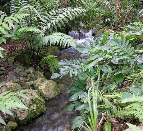 Tropical Zone Botanic Garden Of Bristol Mejores 62 Im 225 Genes De Botanical Gardens En Pinterest Jardines Bot 225 Nicos Bristol Y Asheville