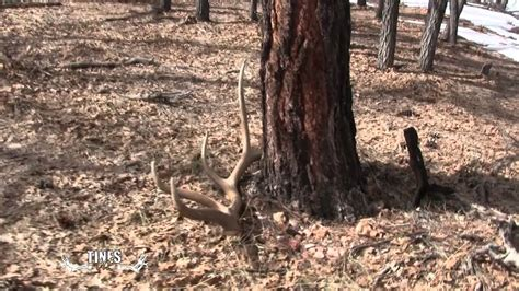 Moose Antler Sheds by Tines Up Tuesday Episode 5 Shed Antler Road Trip