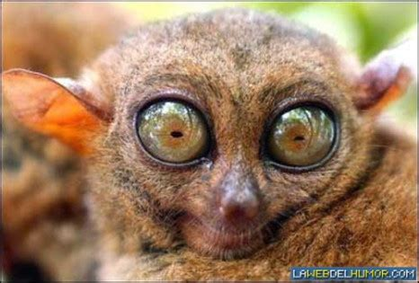 imagenes de animales feos 301 moved permanently