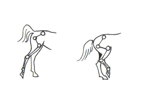 hind leg hind legs of the straightness