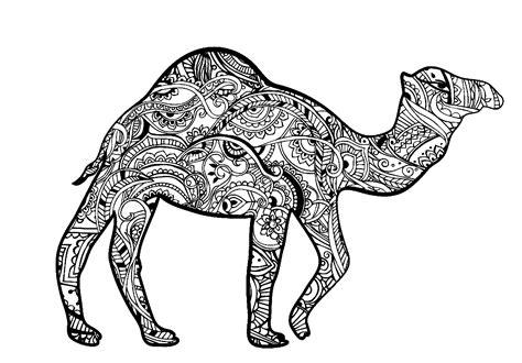 dromedary zentangle camels dromedaries adult coloring