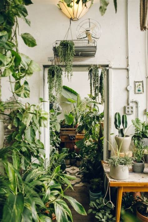 25 best ideas about indoor tropical plants on