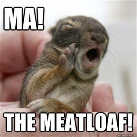 Mom The Meatloaf Meme - 30 funny animal captions part 21 30 pics funny