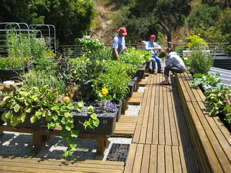 Urban Roof Vegetable Garden Home Designs Project Rooftop Vegetable Garden